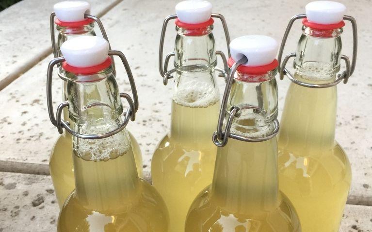Bottiglie per il Kombucha